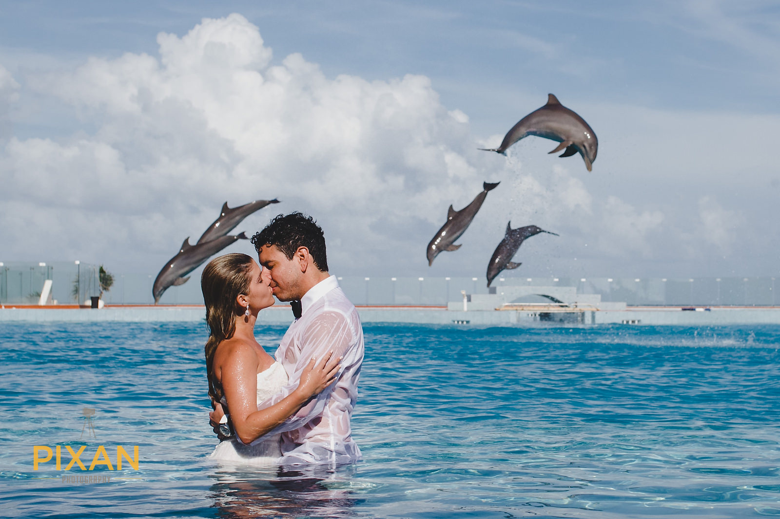 Dolphin Encounter Mexico Wedding