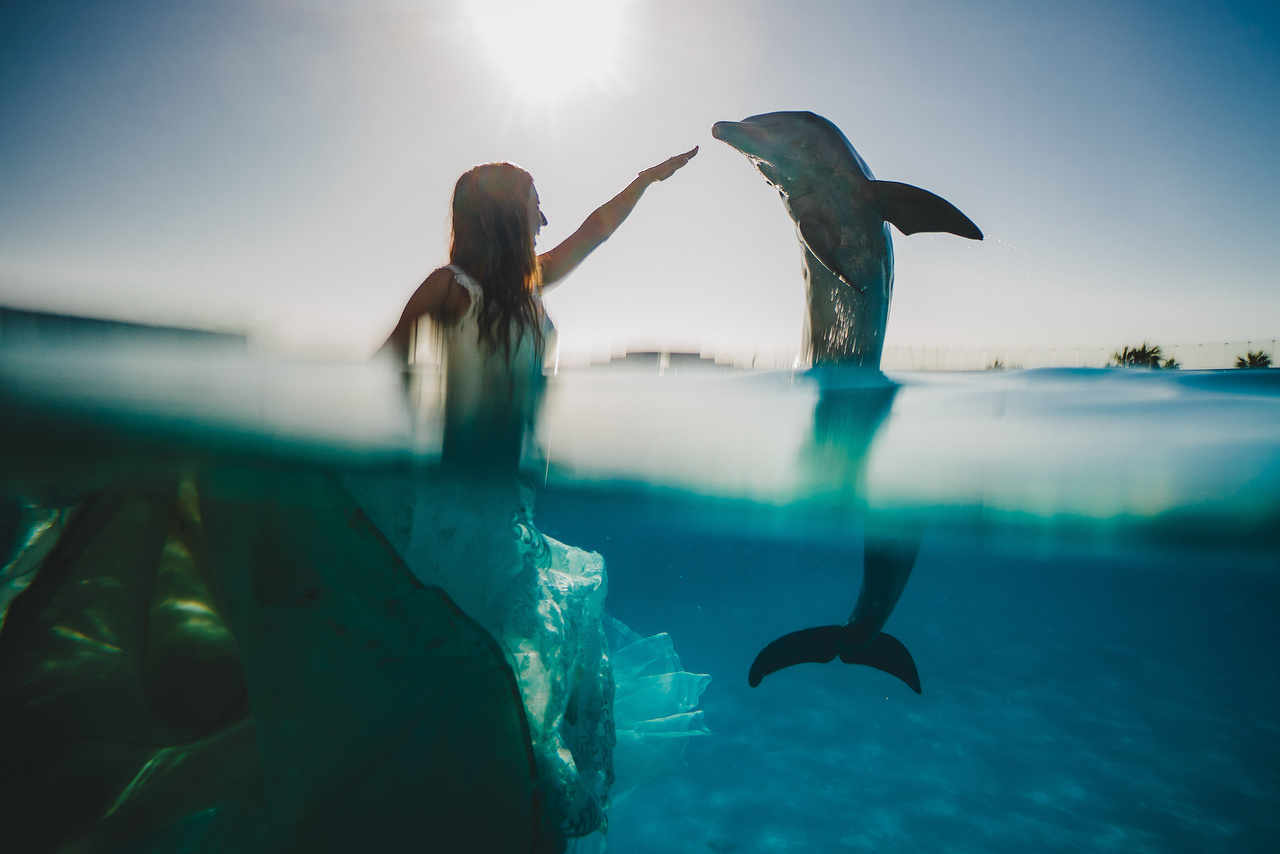 Dolphin Trash The Dress Image